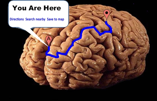 High resolution BigBrain image above reveals the human brain's paired <em>middle cerebellar peduncles</em> as well as the quickest way to reach them via the southern portion of the Tri-state Tollway I-294 through Illinois.