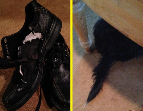 Who chewed the shoes? Can you solve this Minute Mystery? For the answer, turn to page 159.