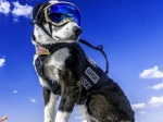 ht_piper_airport_dog_2_er_160229_4x3_992-resized-70-percent